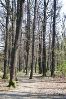 FOTKA - Stromy vysoké