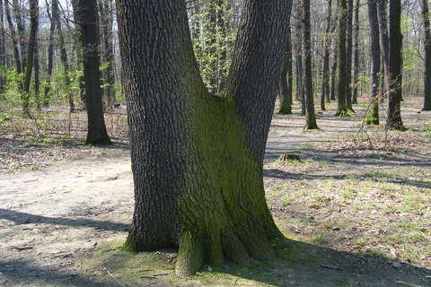 FOTKA - Stromy dvojstrom