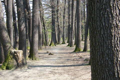 FOTKA - Stromy,les