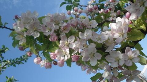 FOTKA - Nádherné jaro