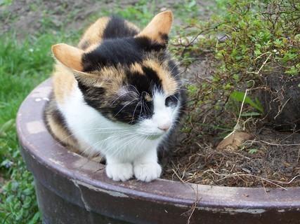 FOTKA - Dorotka hlídá koťata.