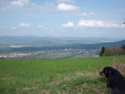 FOTKA - Roxy  obdívuje  hory / 19.4.2009/.