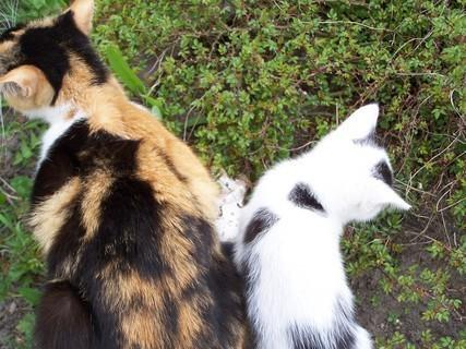 FOTKA - Kočky v růžích