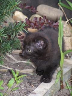FOTKA - Koťátko venku