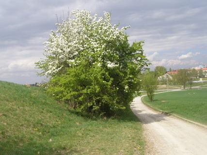 FOTKA - KVETE