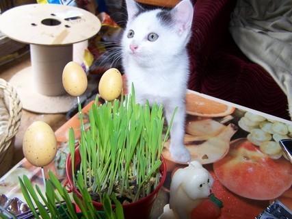 FOTKA - Kotě a velikonoční osení