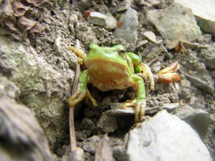 FOTKA - potkaly jsme na procházce žabku