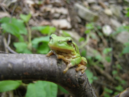 FOTKA - žabka