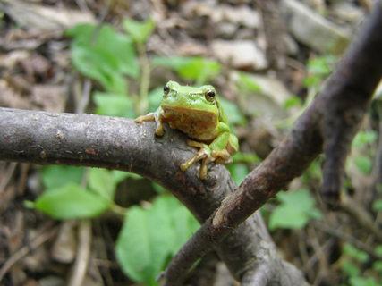 FOTKA - potkaly jsme na procházce žabku .