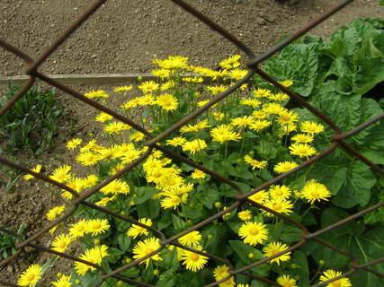 FOTKA - za plotem