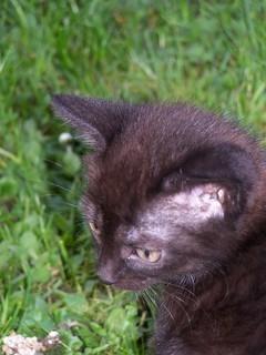 FOTKA - Kotě;