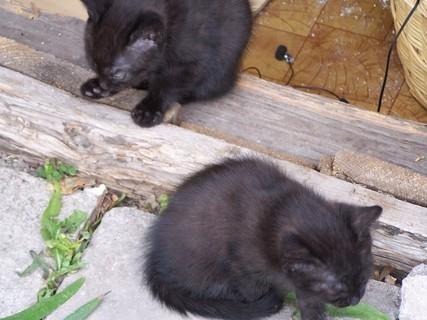FOTKA - -koťata