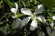Květy v trní
