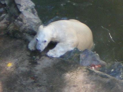 FOTKA - Medvídek z Brna