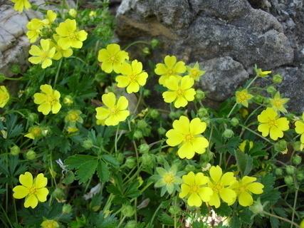 FOTKA - žluté kytičky