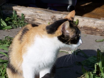 FOTKA - Dorotka hlídá koťata