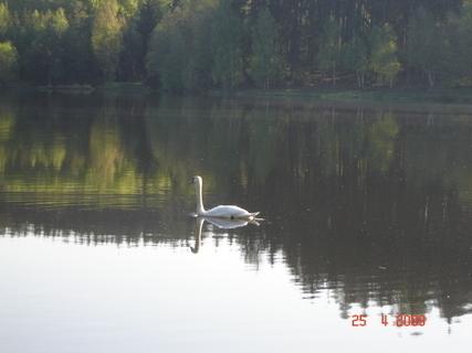 FOTKA - Domanínský rybník§