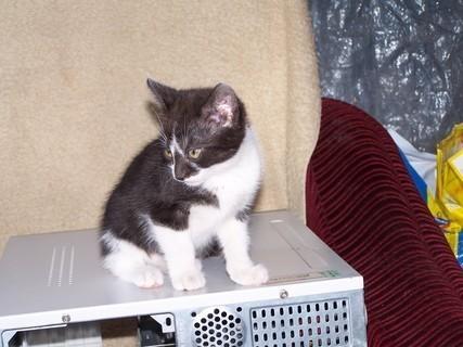 FOTKA - kočička-