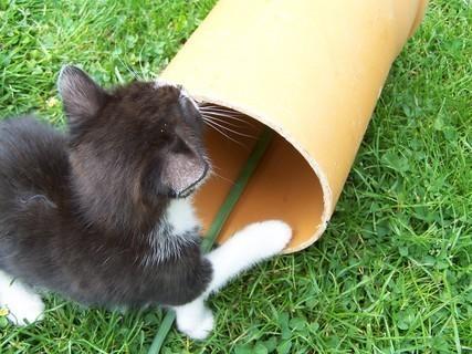 FOTKA - kotě,,,,