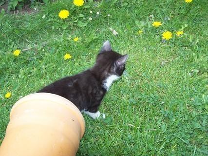 FOTKA - kotě,,,,,