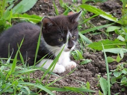 FOTKA - kotě,,,,,,