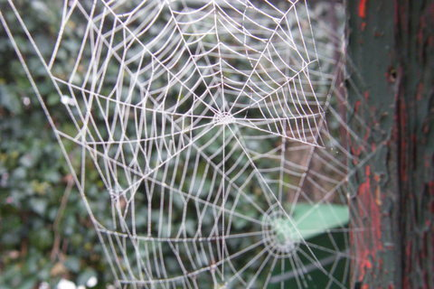 FOTKA - pavučina