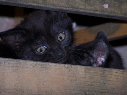 FOTKA - Kočka s kocourem