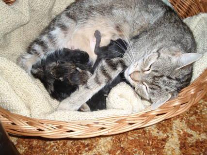 FOTKA - Matylda má zase koťata