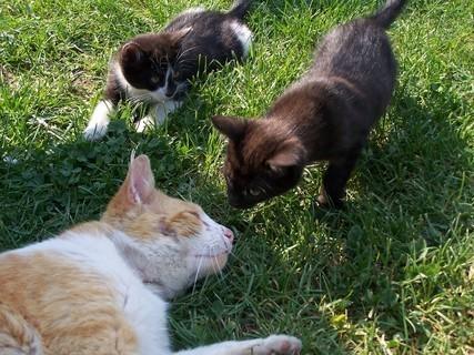 FOTKA - Kocour a koťátka