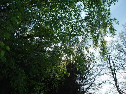FOTKA - jaro- koruny stromů