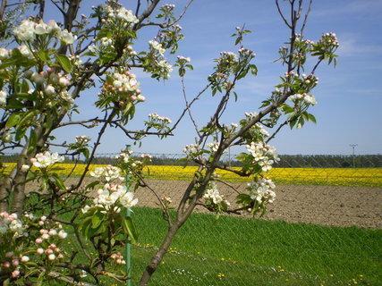 FOTKA - Jaro na zahradě