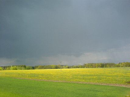 FOTKA - Louka po dešti