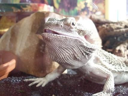 FOTKA - Agáta coby zlý krokodýl