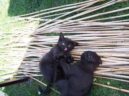 FOTKA - kočičí hraní