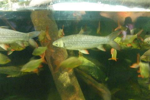 FOTKA - Hejno rybiček