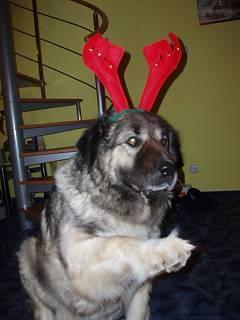 FOTKA - Vánoce Nikitka