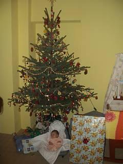 FOTKA -  Vánoce 2006