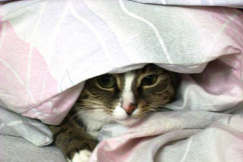 FOTKA - moje kočka