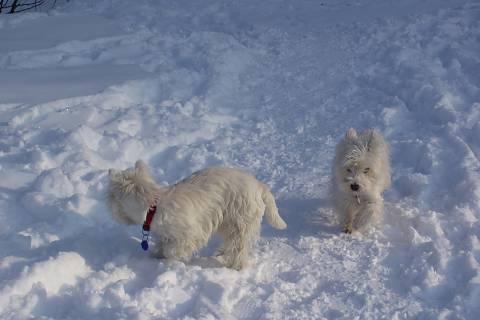 FOTKA - pejsci na sněhu