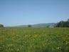 Jizerské hory  za Libercem - 2.5.2009