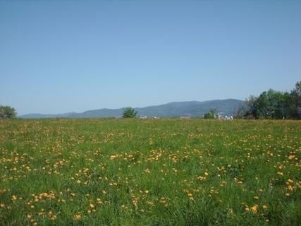 FOTKA - Jizerské hory  za Libercem - 2.5.2009