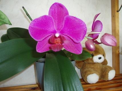 FOTKA - orchidea mého tatínka,