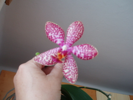 FOTKA - orchidea mého tatínka