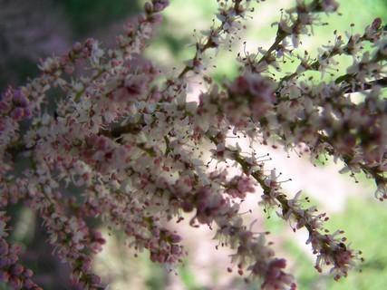 FOTKA - Květ keře