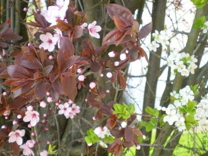 FOTKA - Začíná jaro