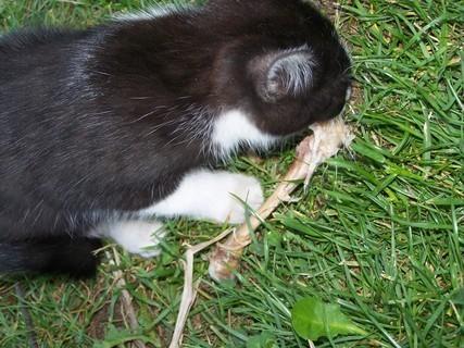 FOTKA - Ukradla si kostičku ze stolu, vrčela u toho jak pes.