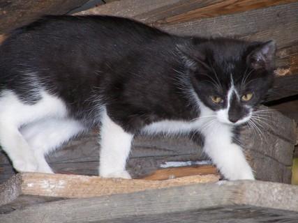 FOTKA - Kotě;;