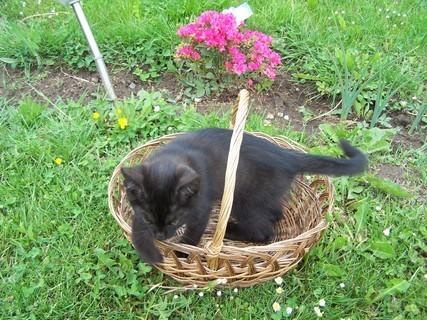 FOTKA - Kotě v koši
