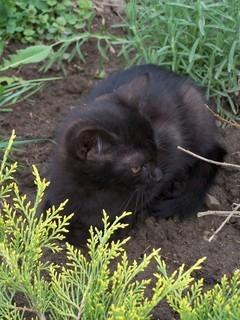 FOTKA - Kotě černé