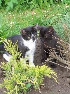 FOTKA - .koťata